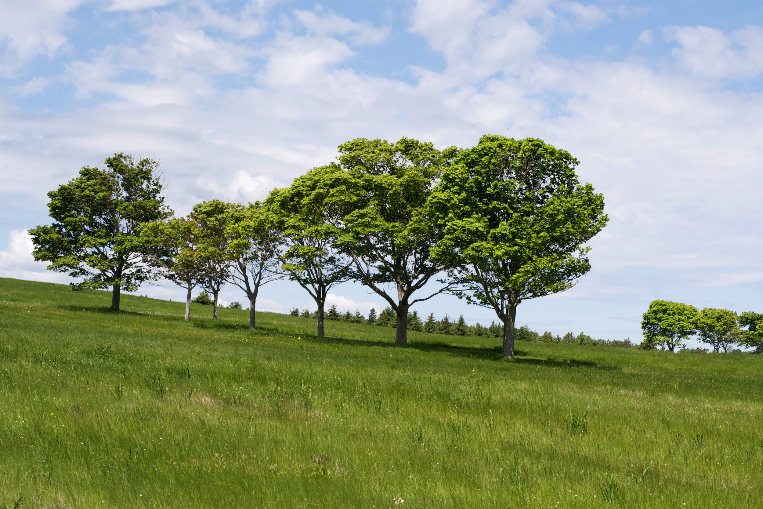 trees-on-a-hill.jpg