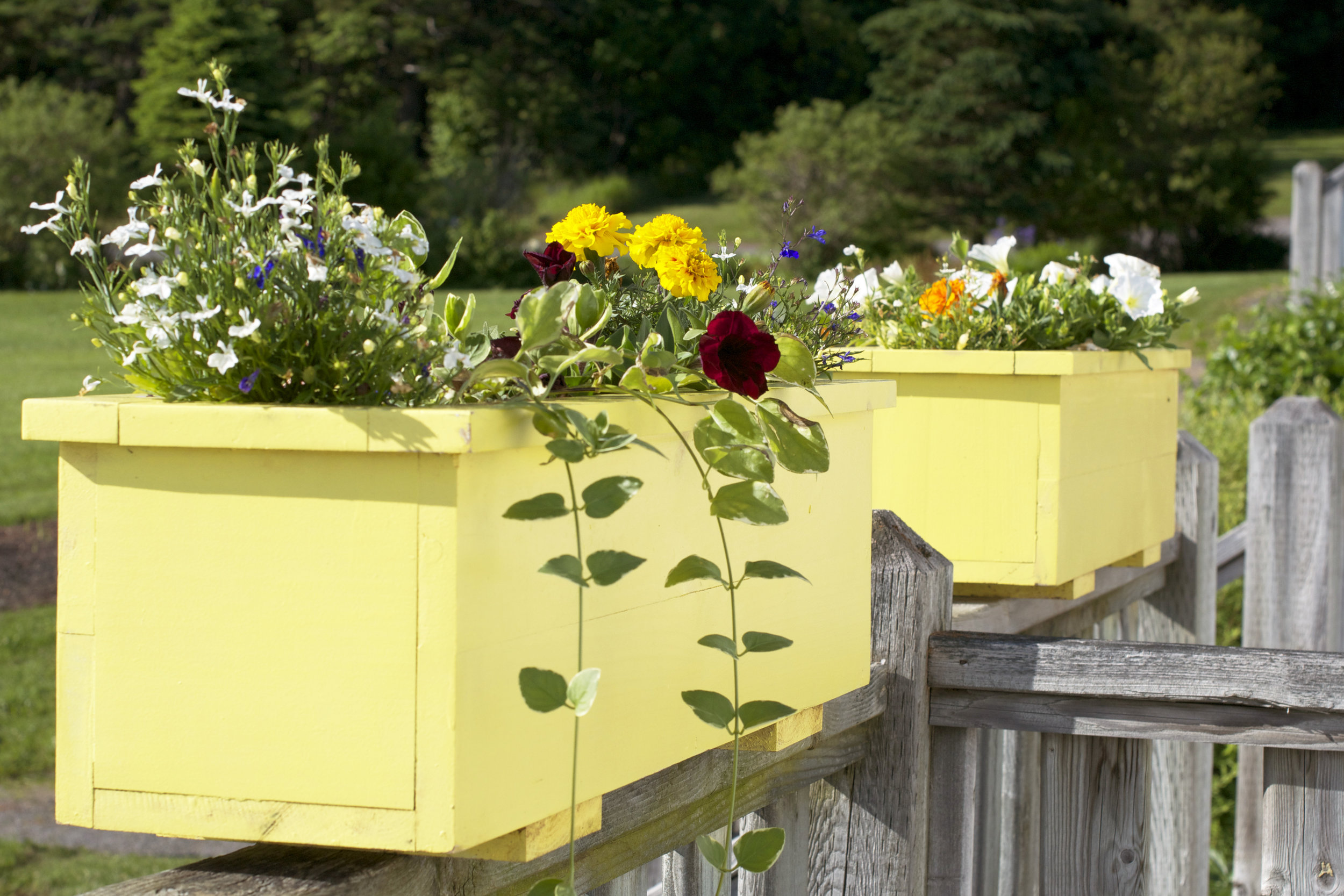 yellow-flower-boxees.jpg