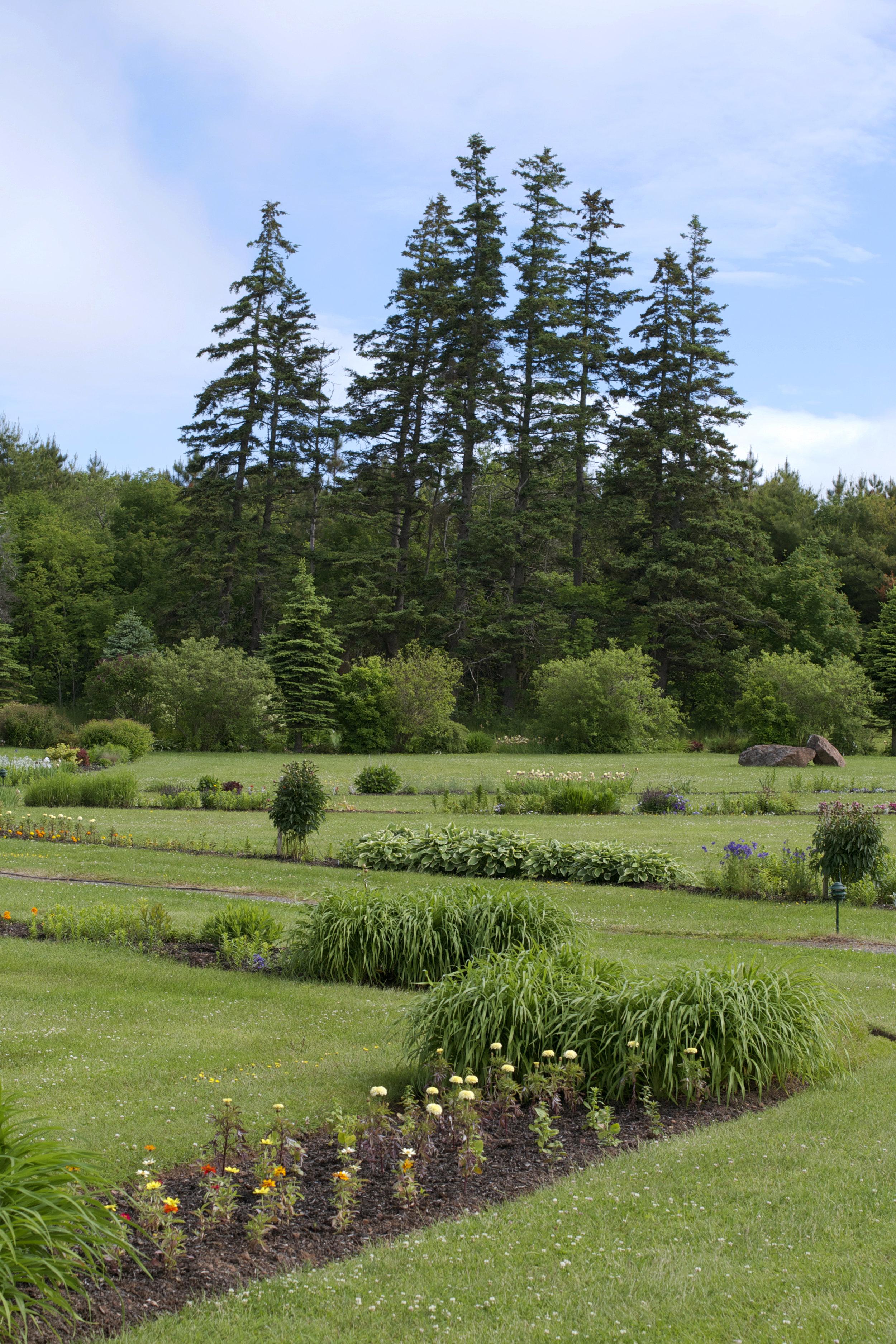 vertical-garden-trees.jpg