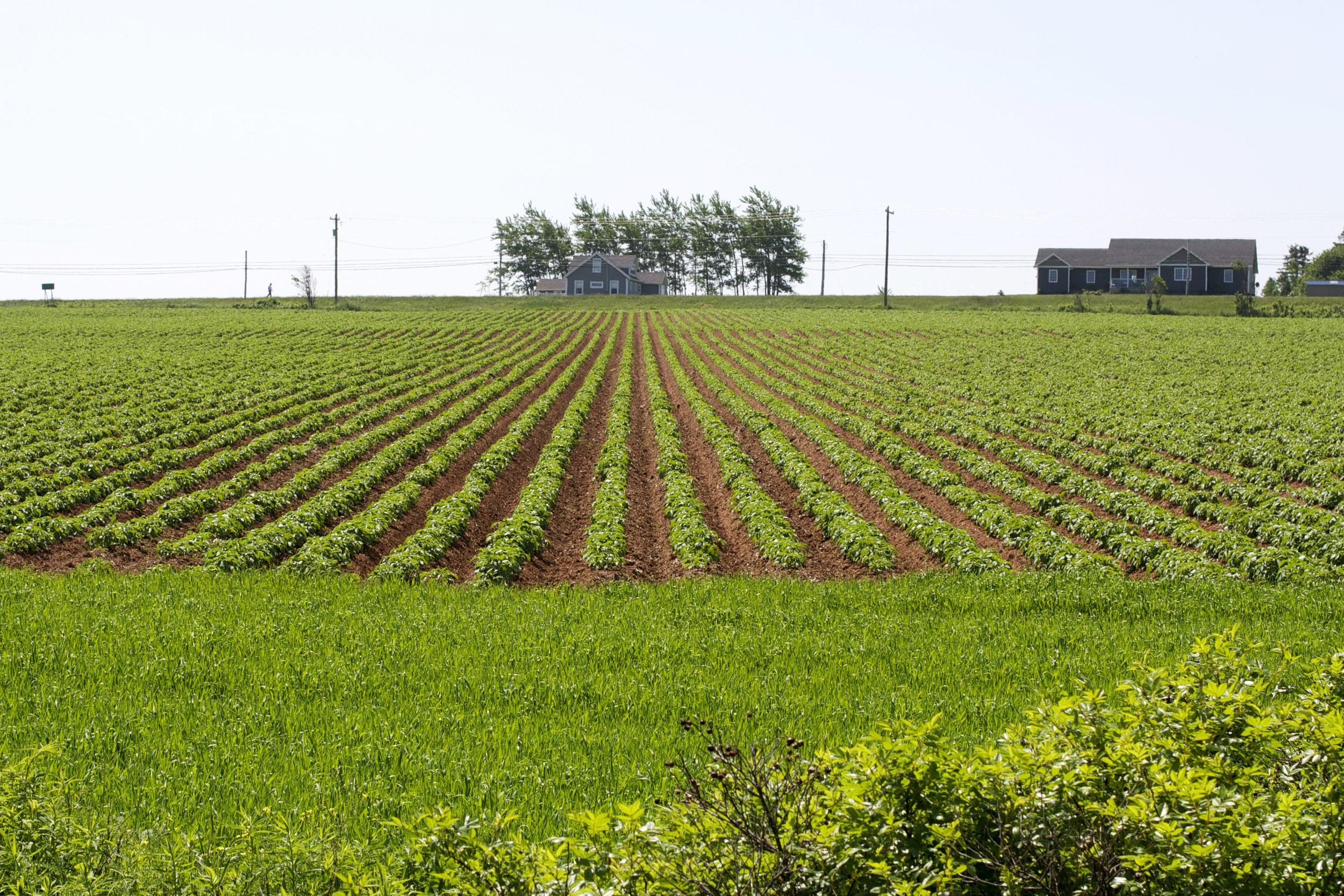 farmers-plowerd-field.jpg