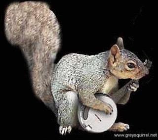 See y'all tomorrow night in Weston. #squirrel #money #banjo