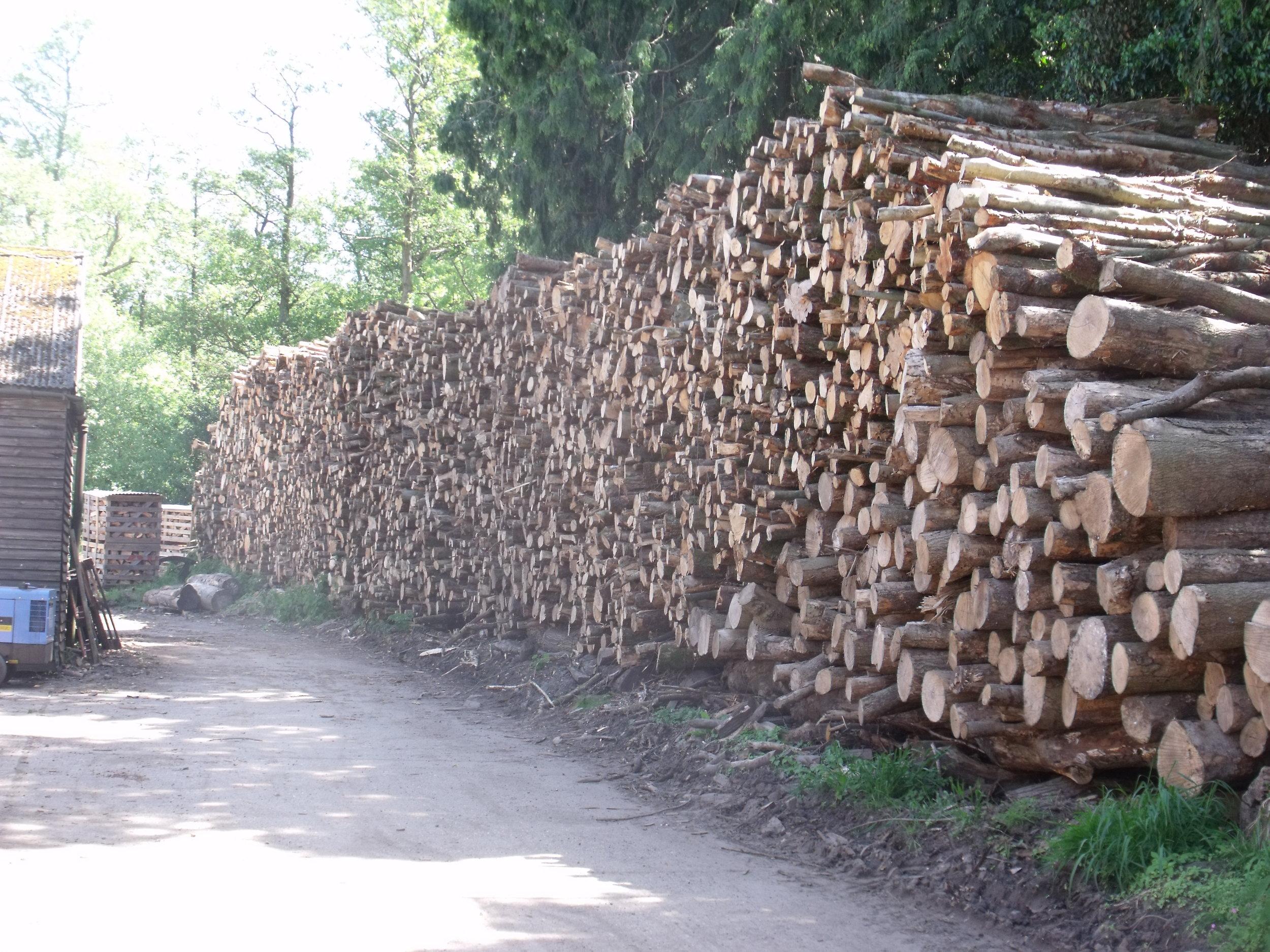 logs on road.JPG