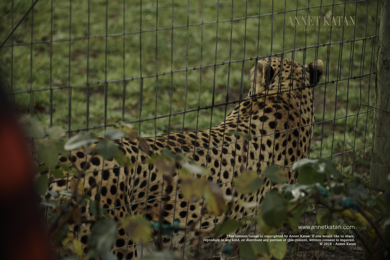 SafariWest_0015.jpg
