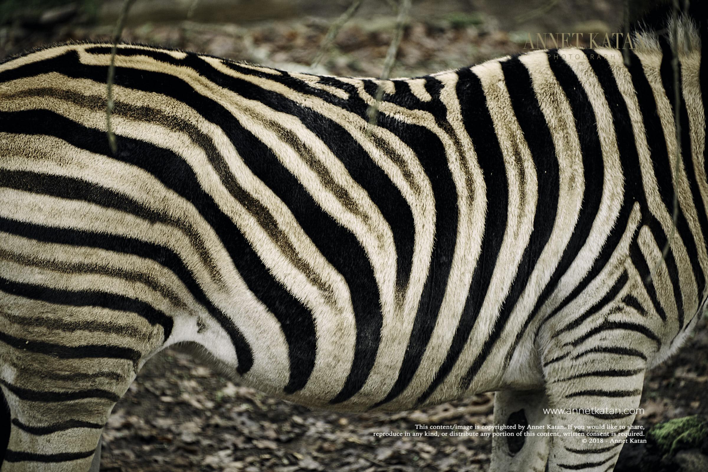 SafariWest_0045.jpg