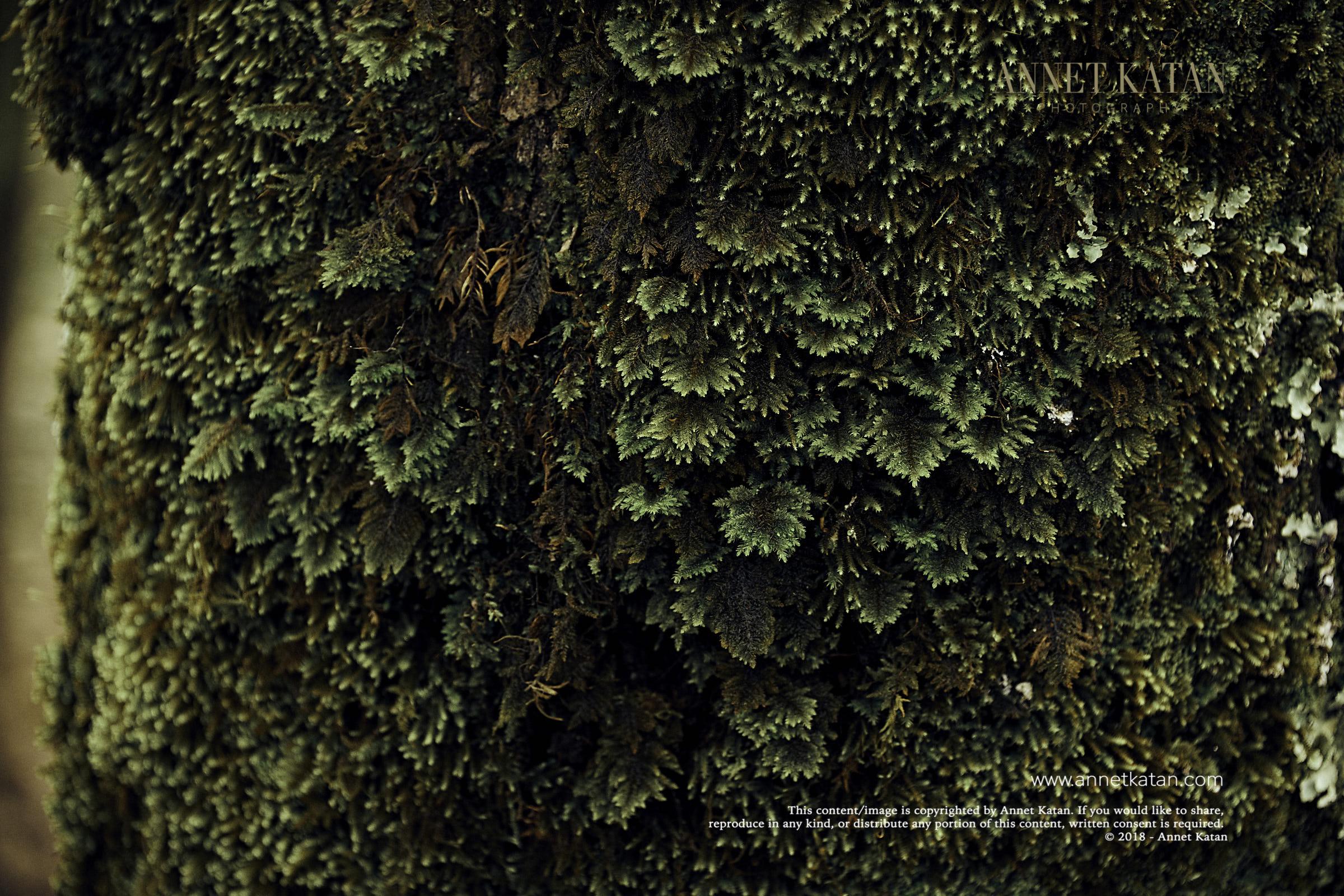 SafariWest_0049.jpg
