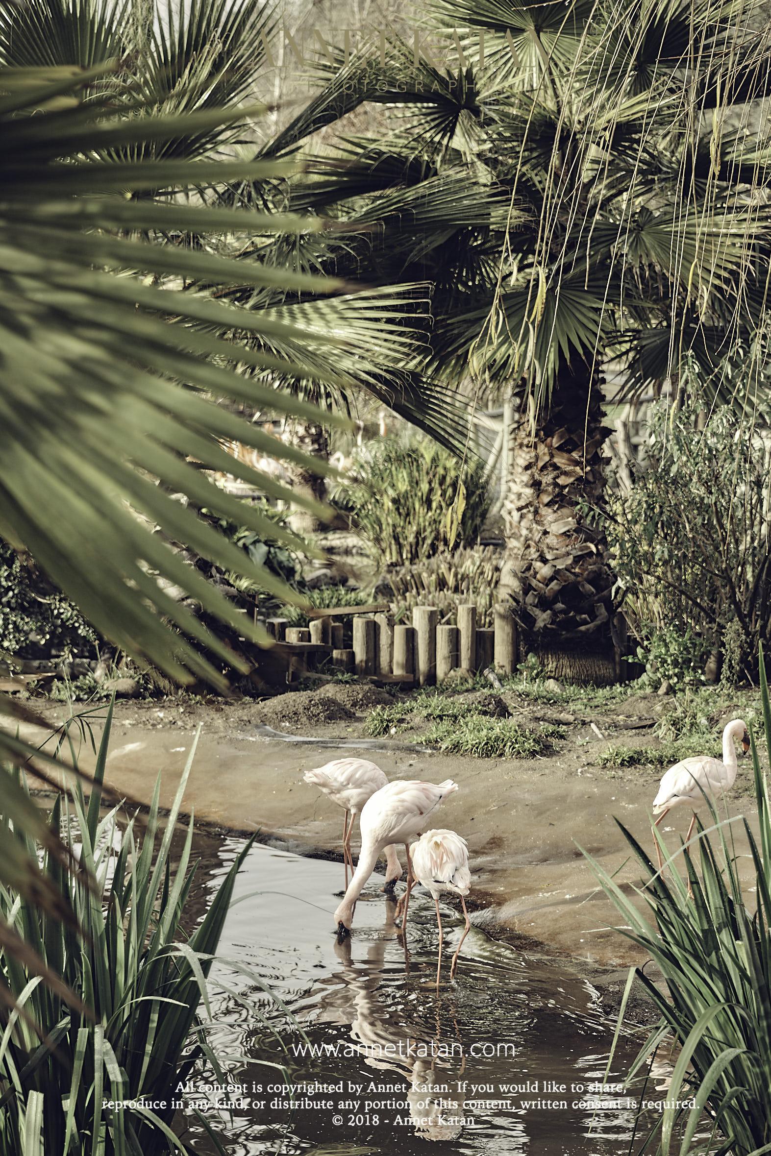 SafariWest_0127.jpg