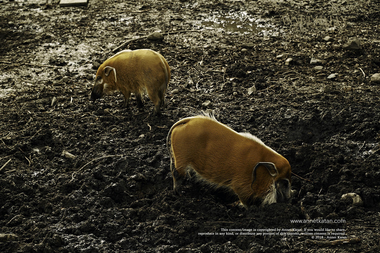 SafariWest_0060.jpg