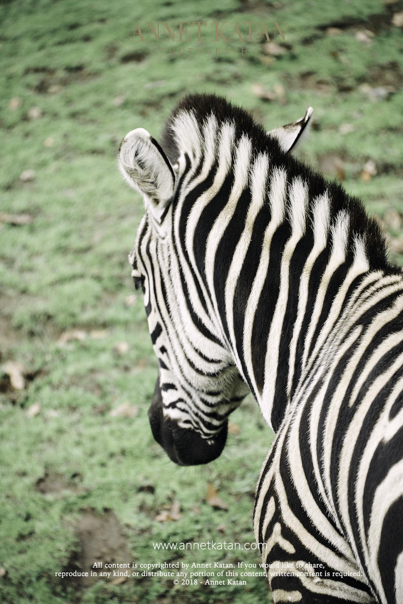 SafariWest_0145.jpg