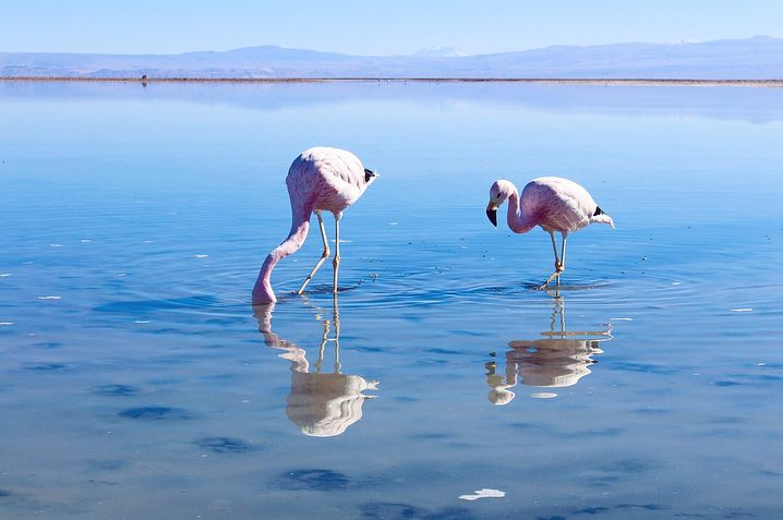 Travel blog guide to flamingos and lagoons in the Atacama Desert, Chile