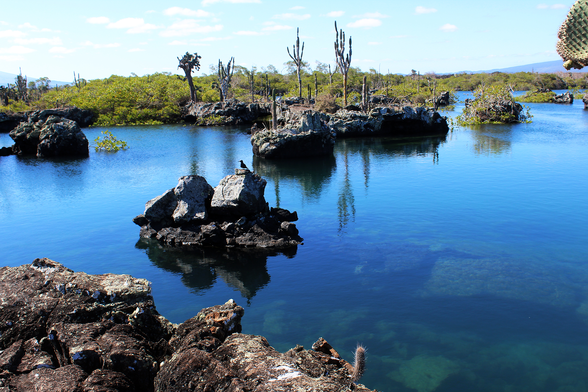 Full travel blog guide to Los Tuneles, things to do on Isla Isabela, Galapagos Islands. Budget travel galapagos islands.