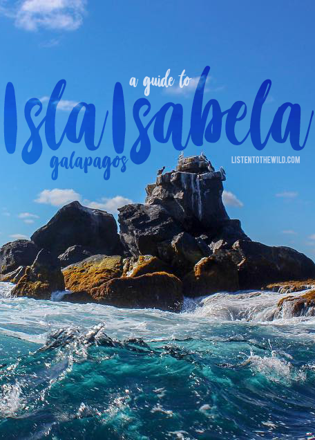 Guide to visiting Isla Isabela, Galapagos on a budget. Galapagos Islands for backpackers.