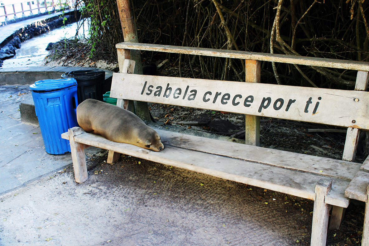 Travel blog guide to visiting Isla Isabela, Galapagos. Travel blog for the Galapagos Islands on a budget.