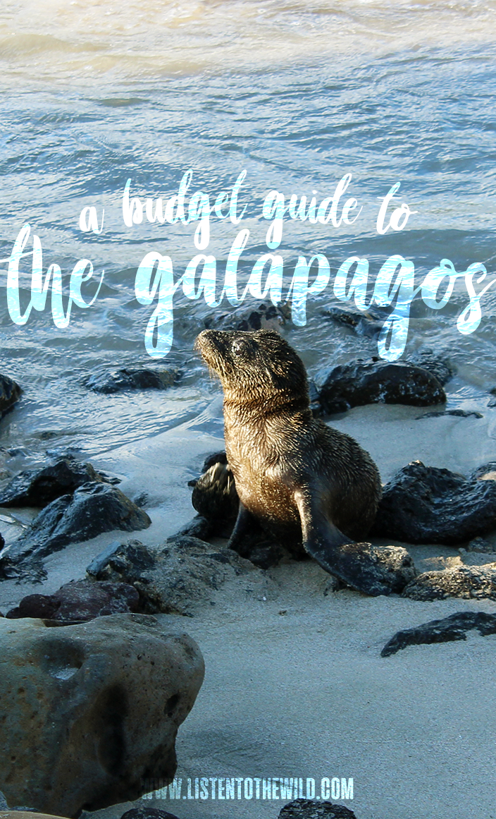 Travel blog guide how to visit the Galapagos islands on a backpacker budget.
