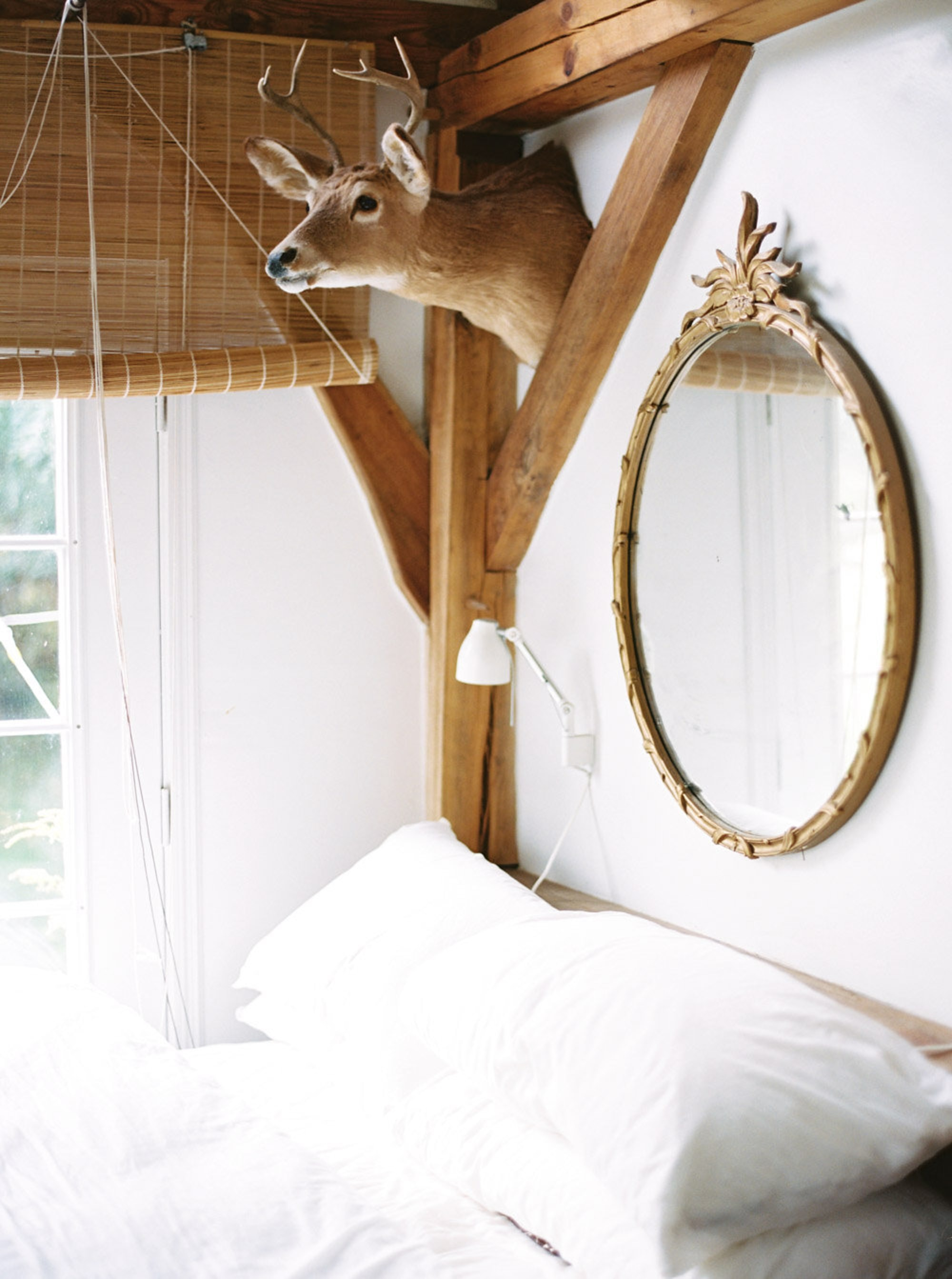 Bed with deer head mounted above