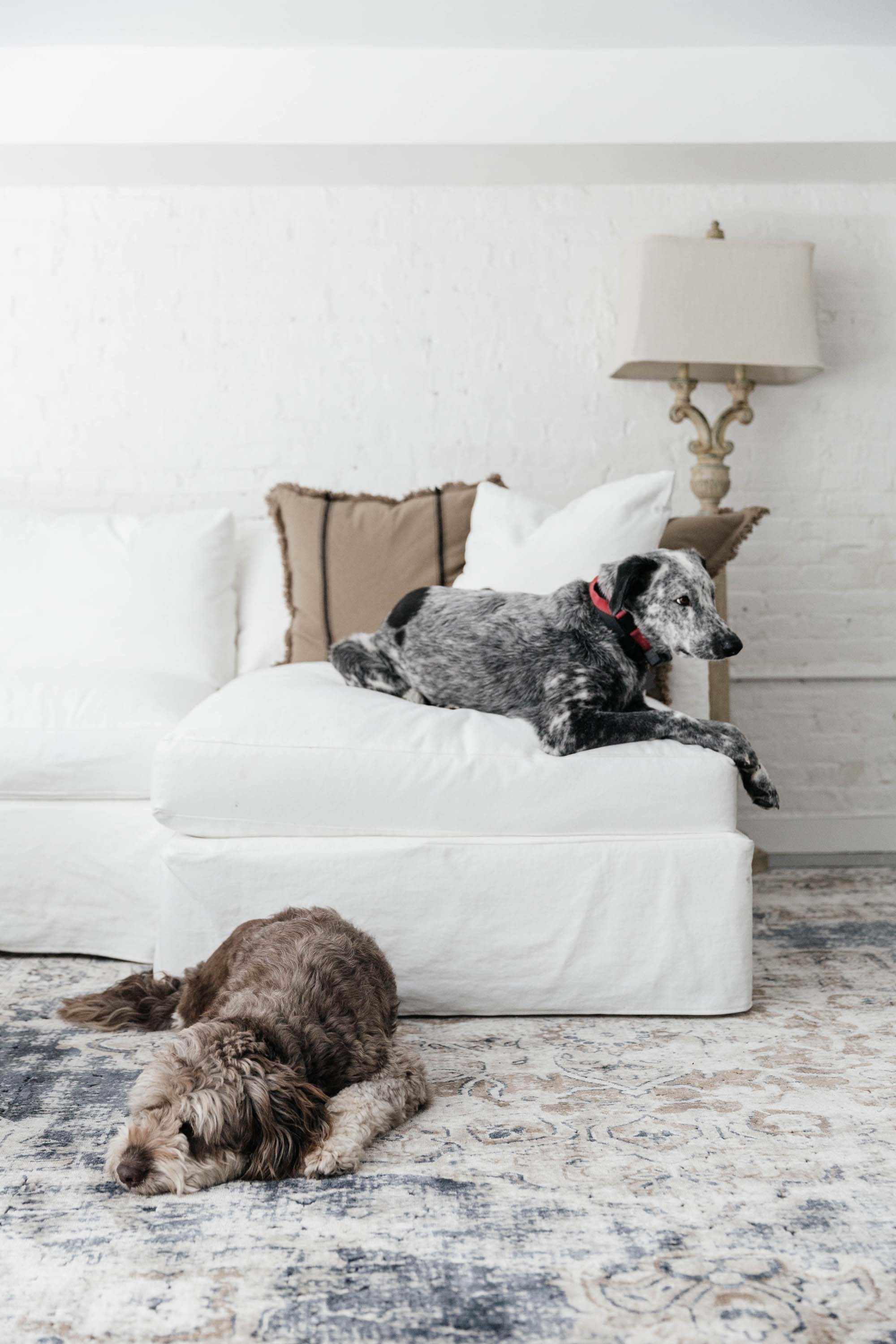 White sectional sofa with dogs lounging