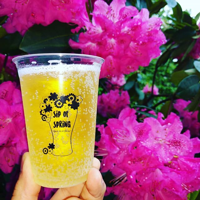 At the Sip of Spring you can also sip cider from Bauman's cidery. English Huckleberry and StrawPerry. Check out the rest of what's pouring and plan your journey at sipofspring.com. #sipofspring #pdxevents #parkrose # Rossi farms # travelportland #Oregoncraftbeer  #exploregon #beerfestival #portlandlife #pdxnow #traveloregon