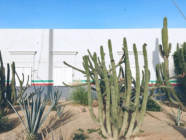 These desert plants make me feel like I was on the USS Voyager and landed in some galaxy 95,000 light years away from Earth. 🌵