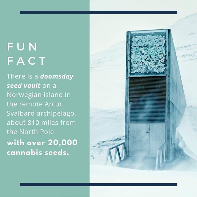 We may not survive the apocalypse but our weed will. #cannabisfacts #funfactfriday #doomsdayseedvault