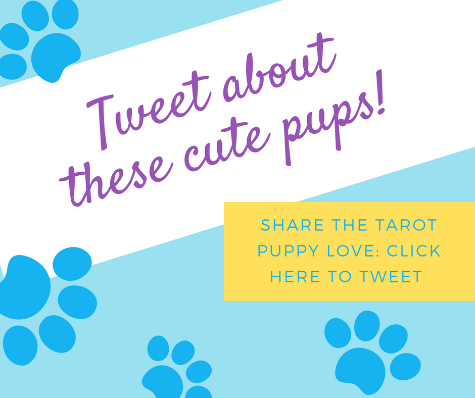 Tweet about these cute pups! Share the tarot puppy love, click here to tweet