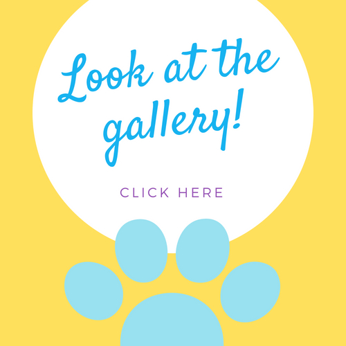 Look at the gallery! Click here