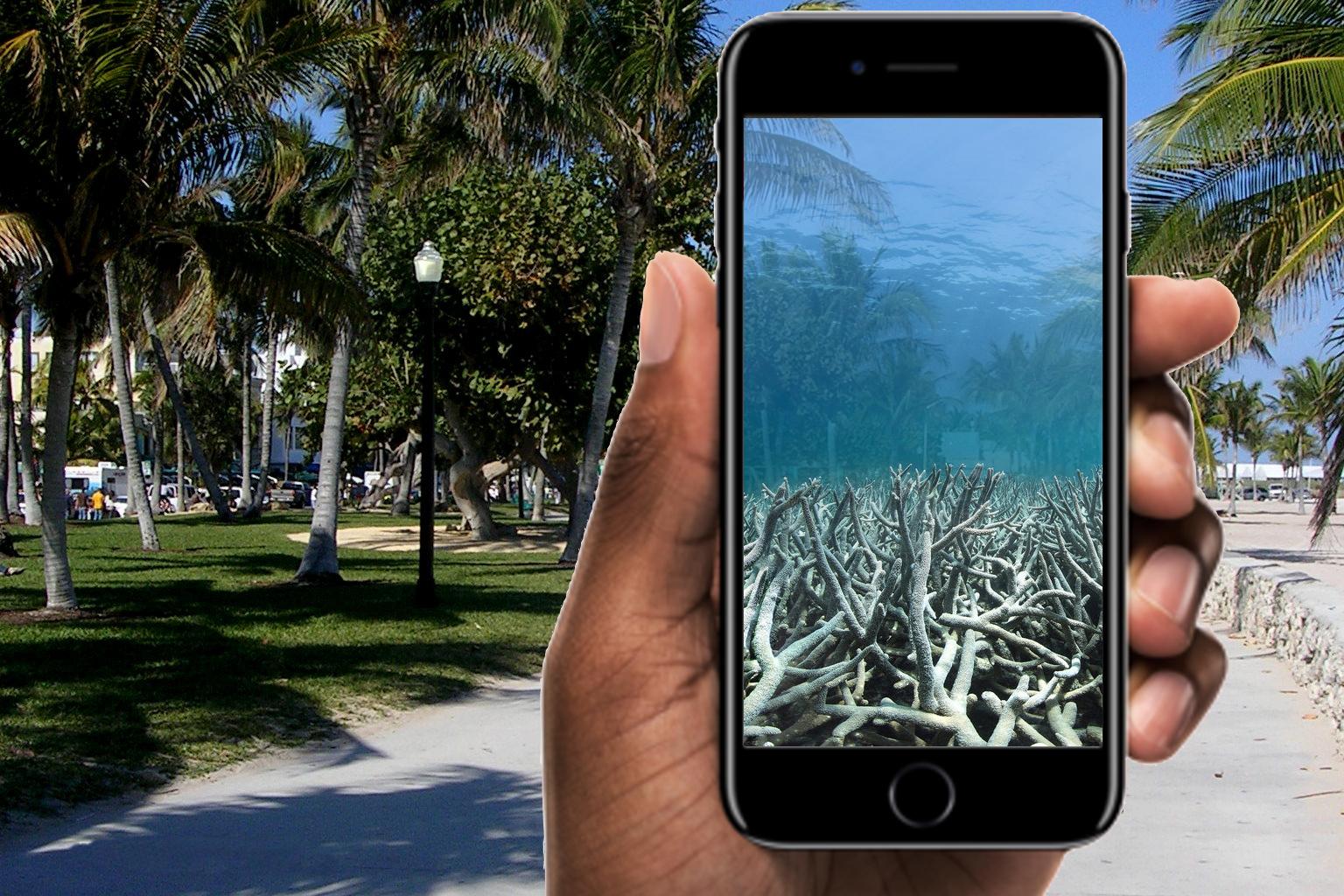 PADI AR reef lifedead.jpeg