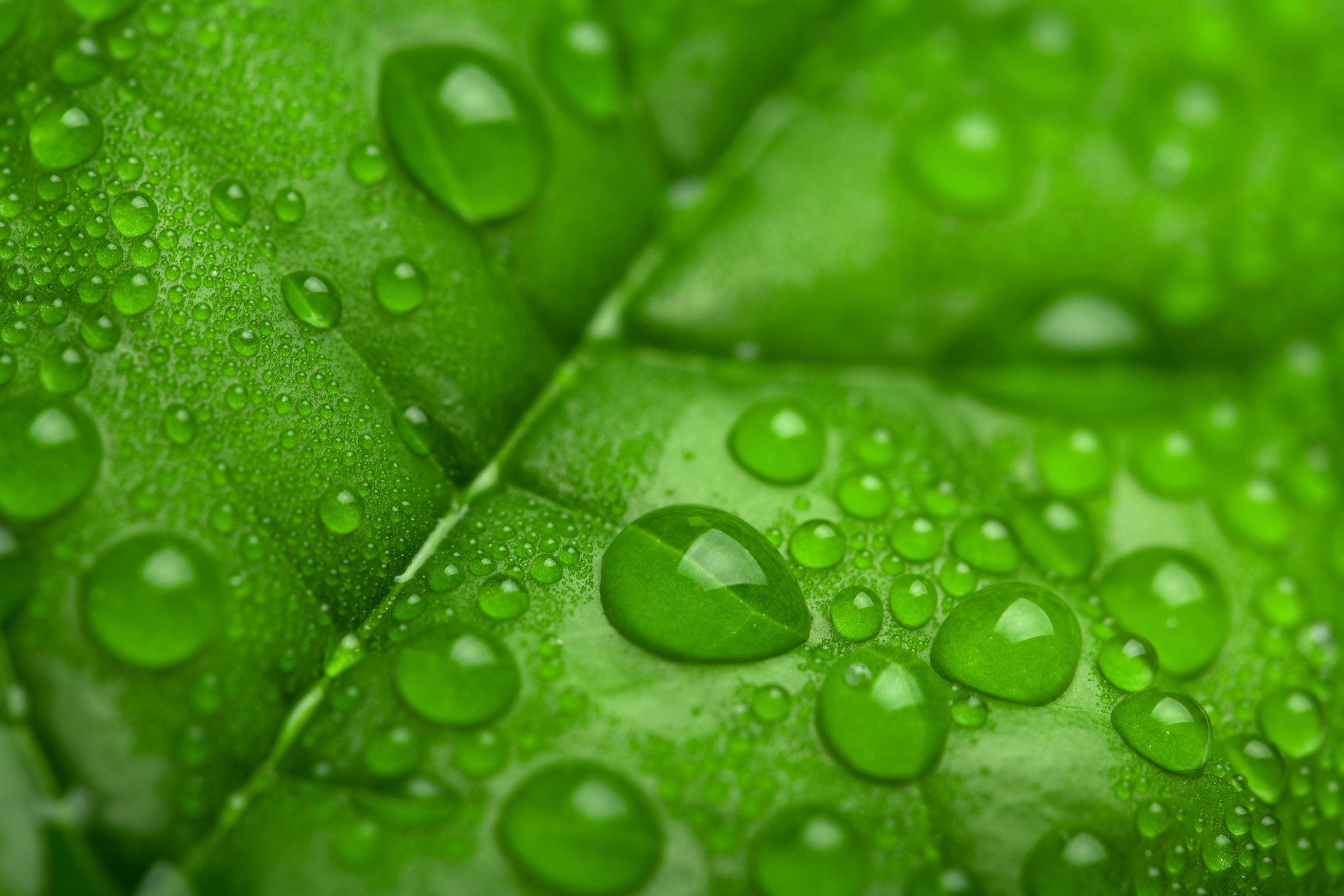 fresh-green-leaf-with-water-droplets-P6JVQCR.jpg
