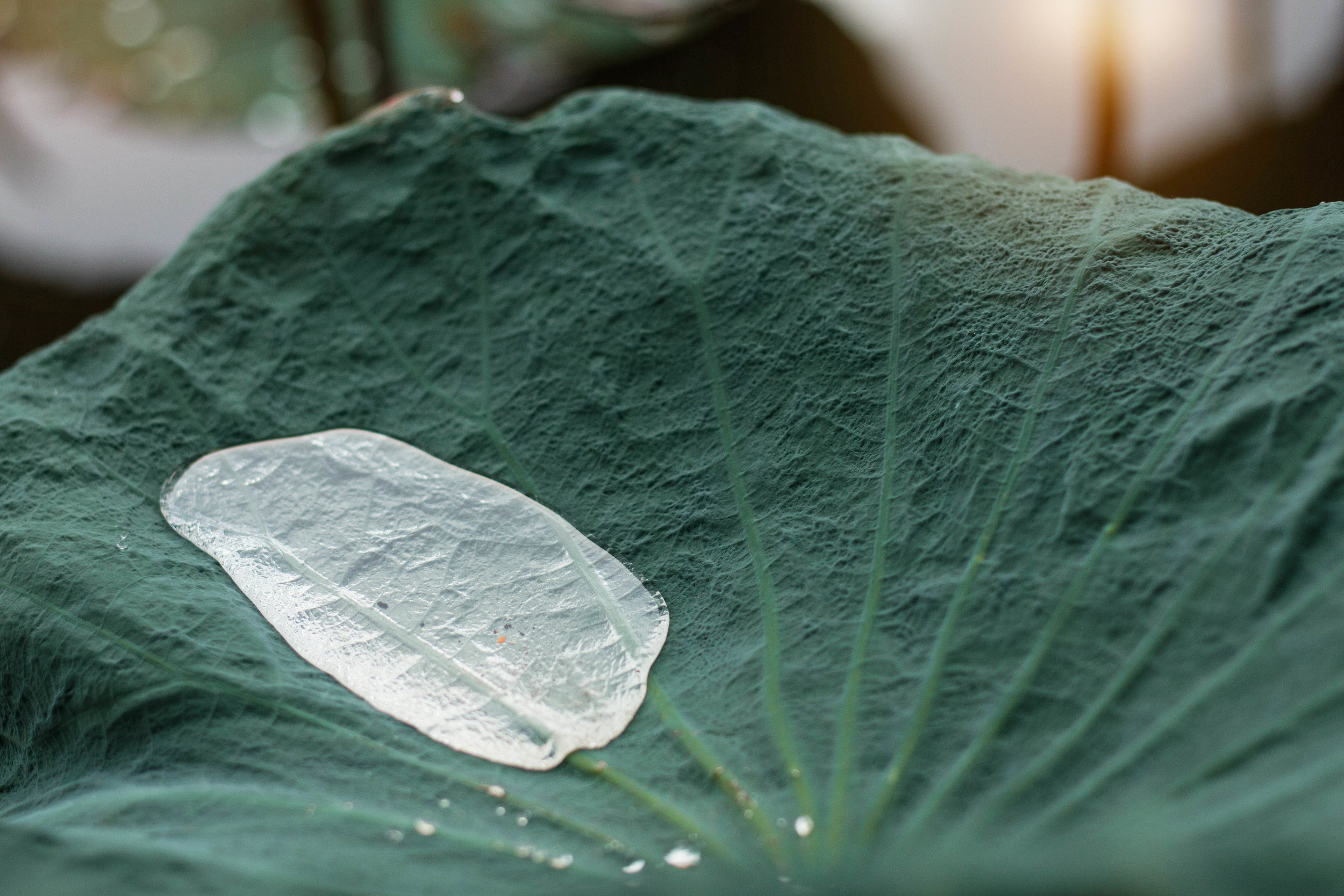 water-drops-on-leaves-after-rain-PHN565C.jpg