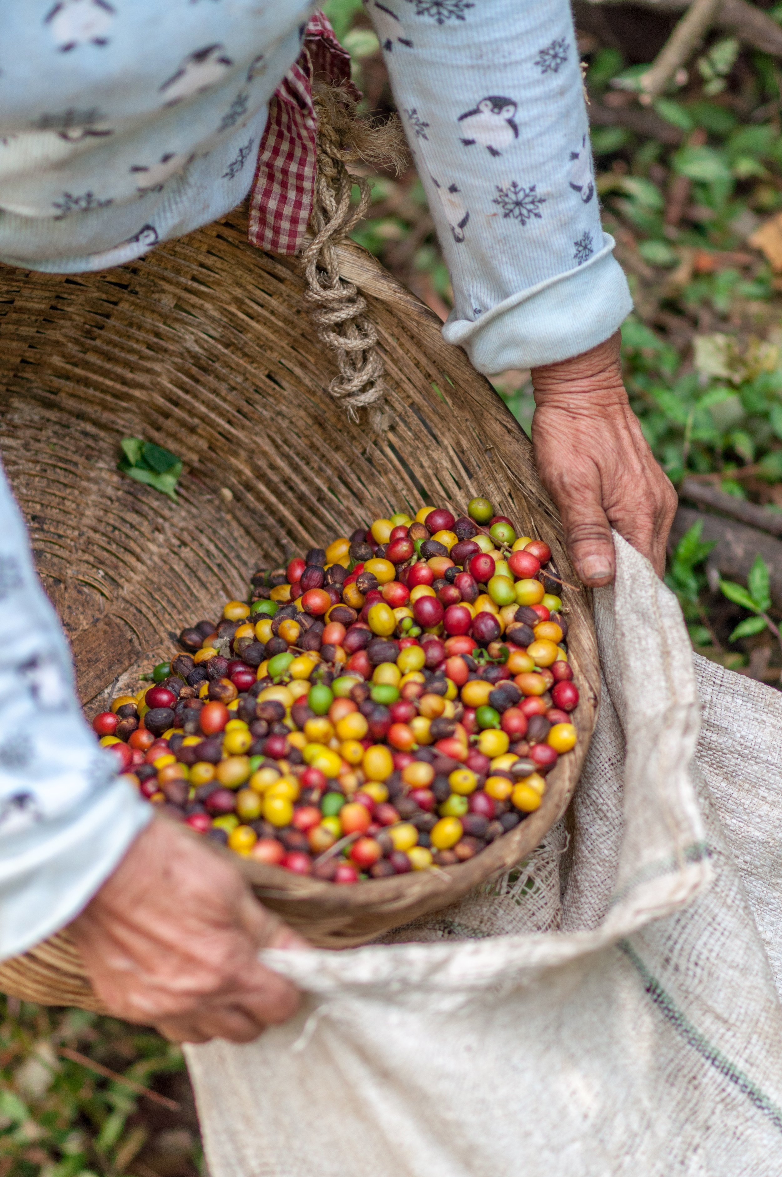 rodrigo-flores-259488-unsplash ethics coffee.jpg