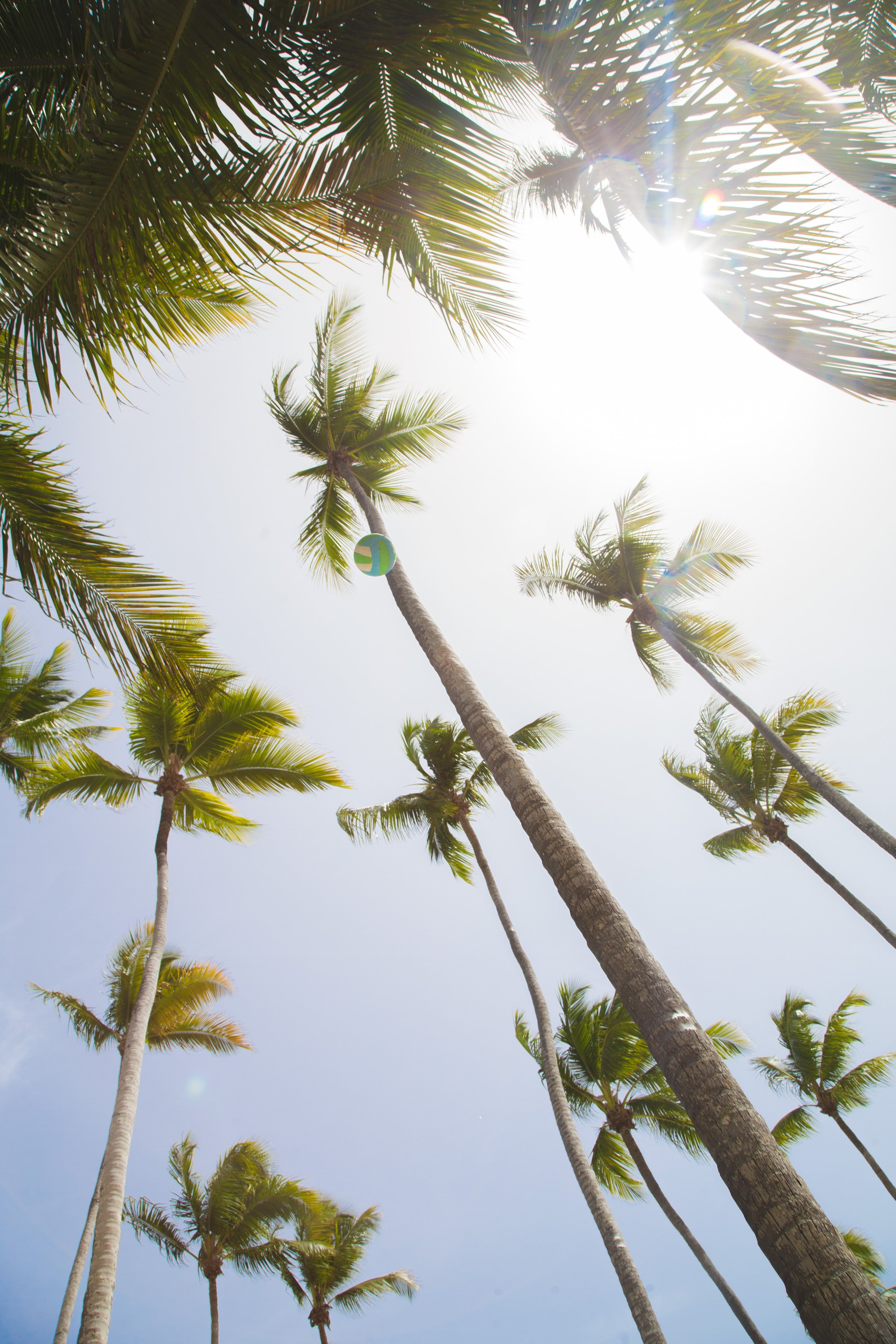 palmiers angle bas.jpg