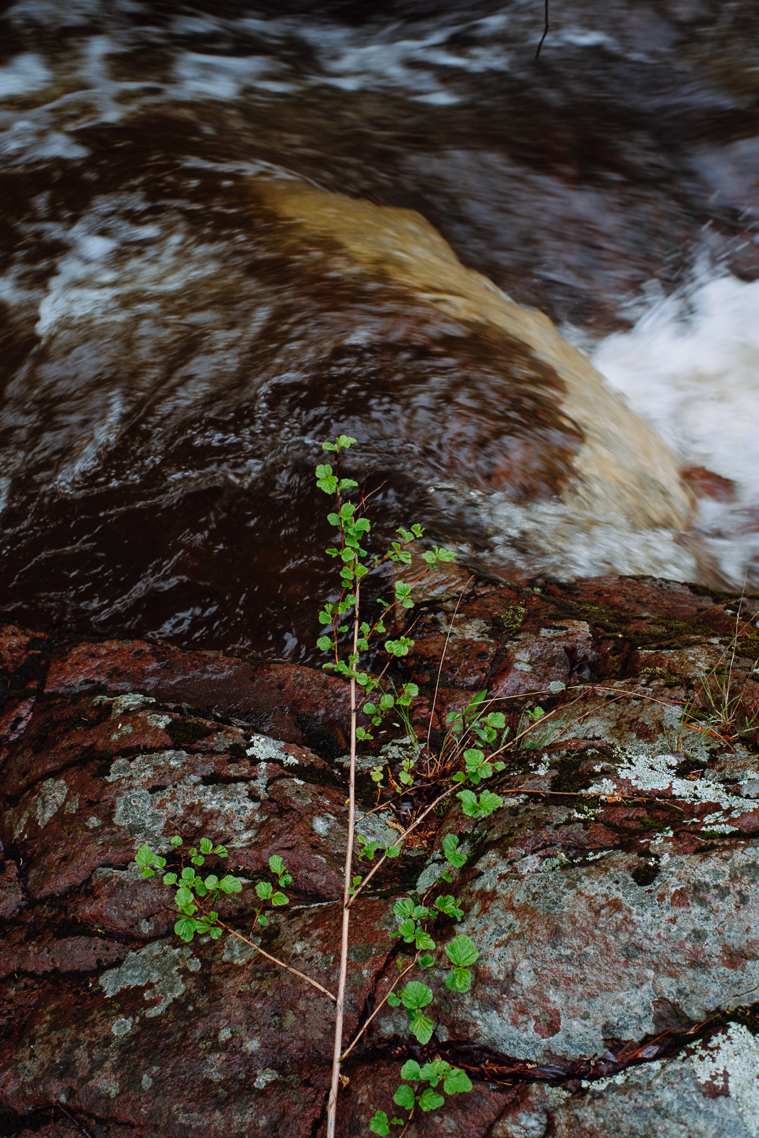 tischer-creek-5-21-2017-1599.jpg