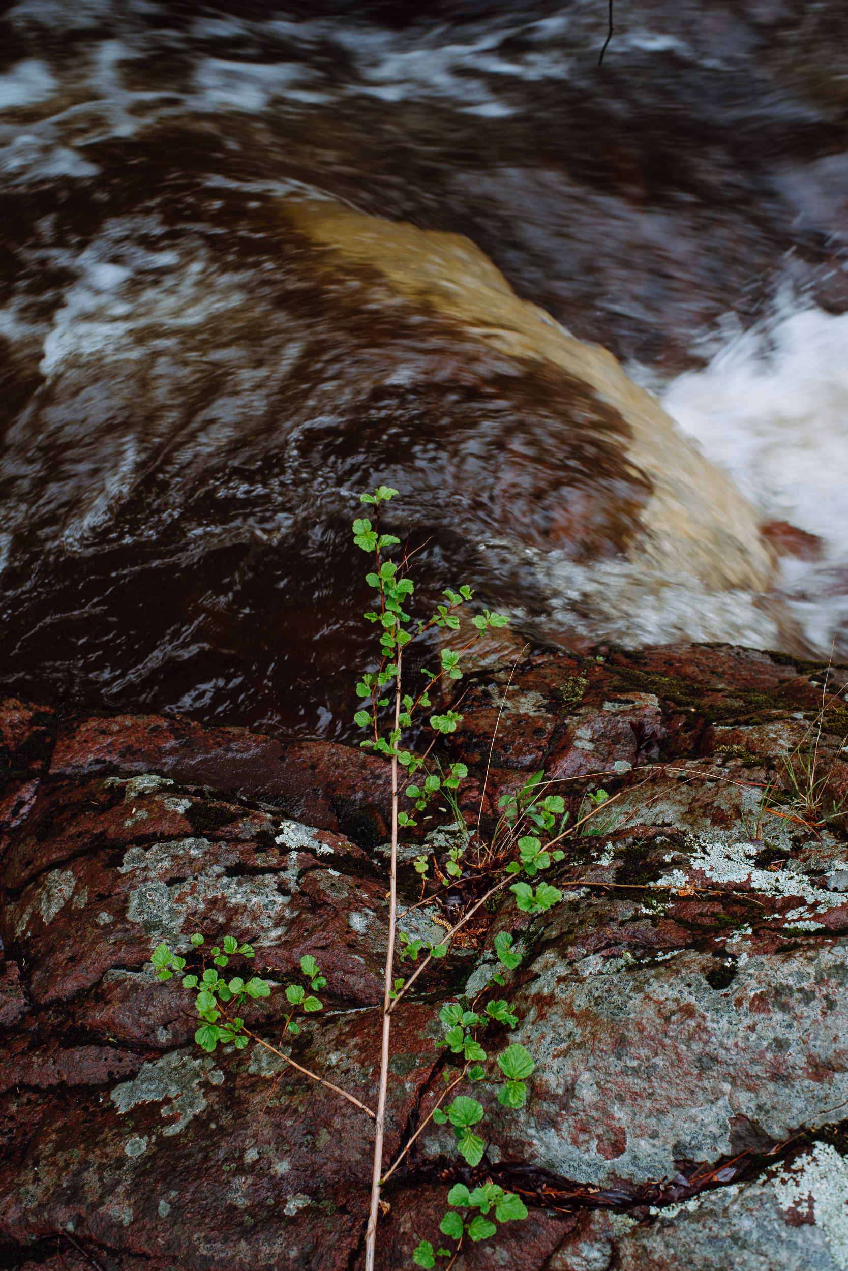 Tischer Creek 5-21-2017-1599.jpg
