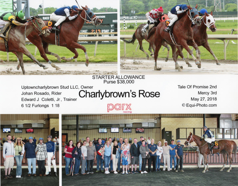Charlybrown's Rose May 27.jpg