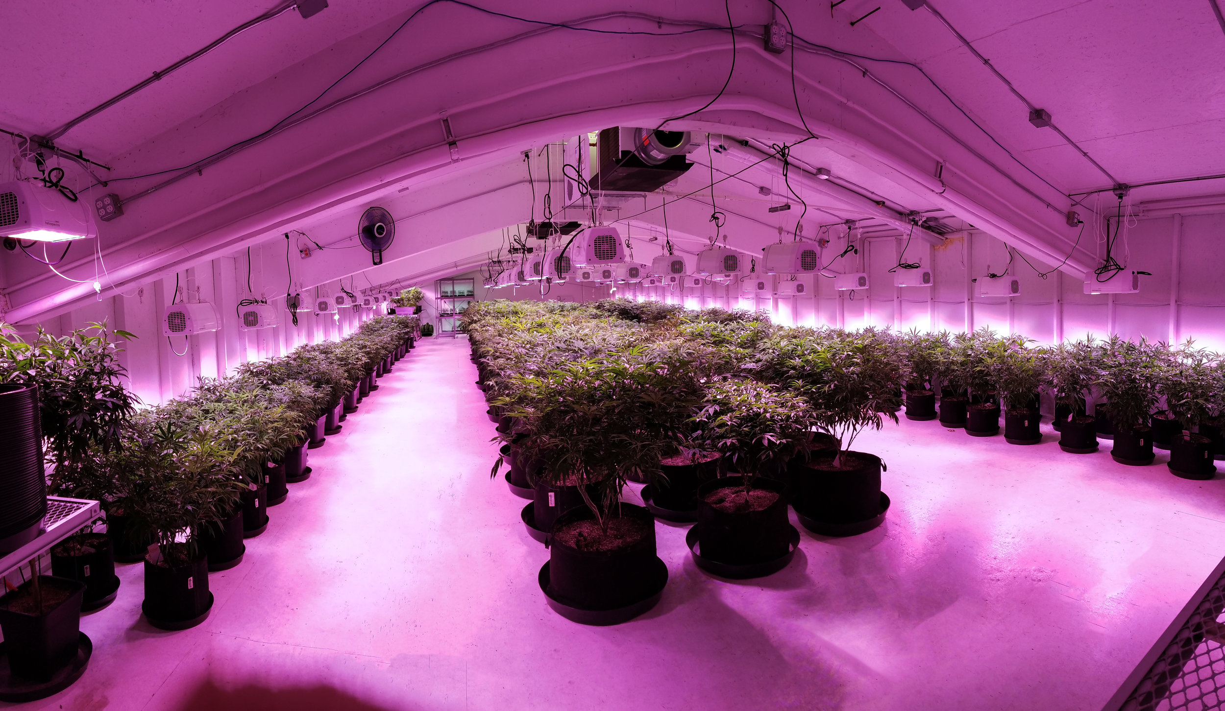 led-grow-cannabis-consultants.jpg