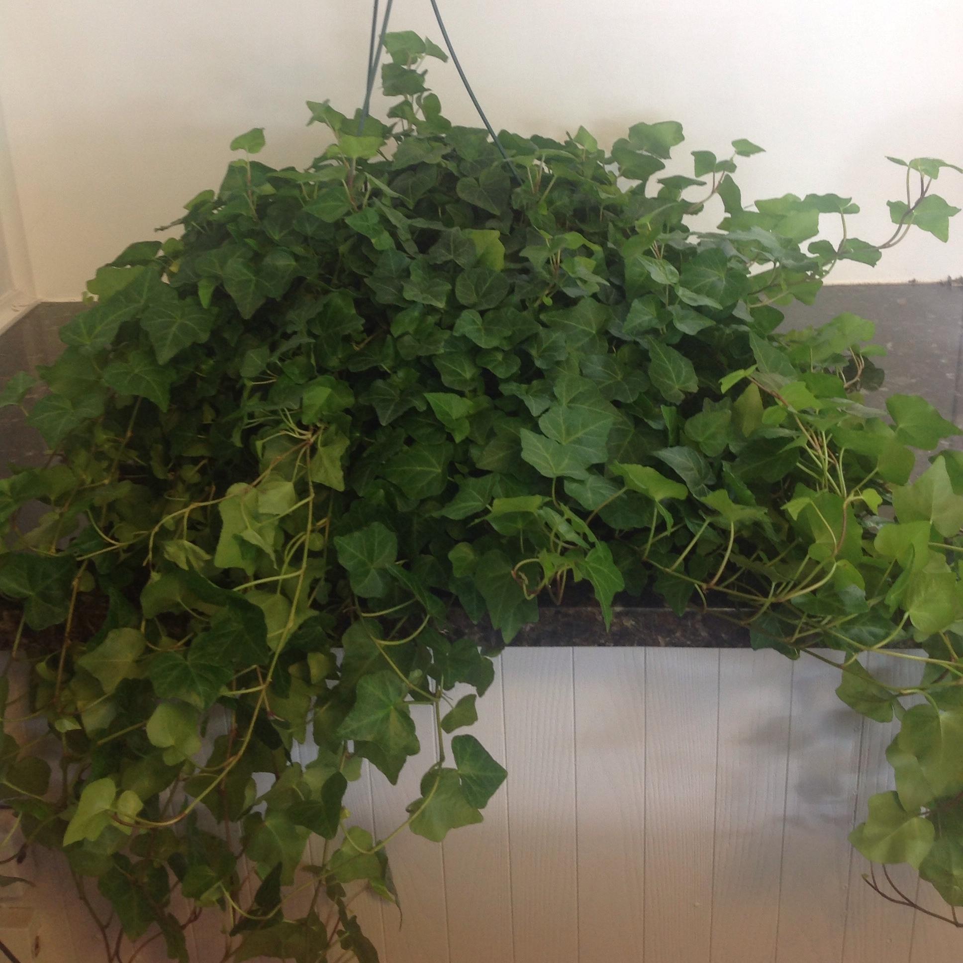 indoor plants -
