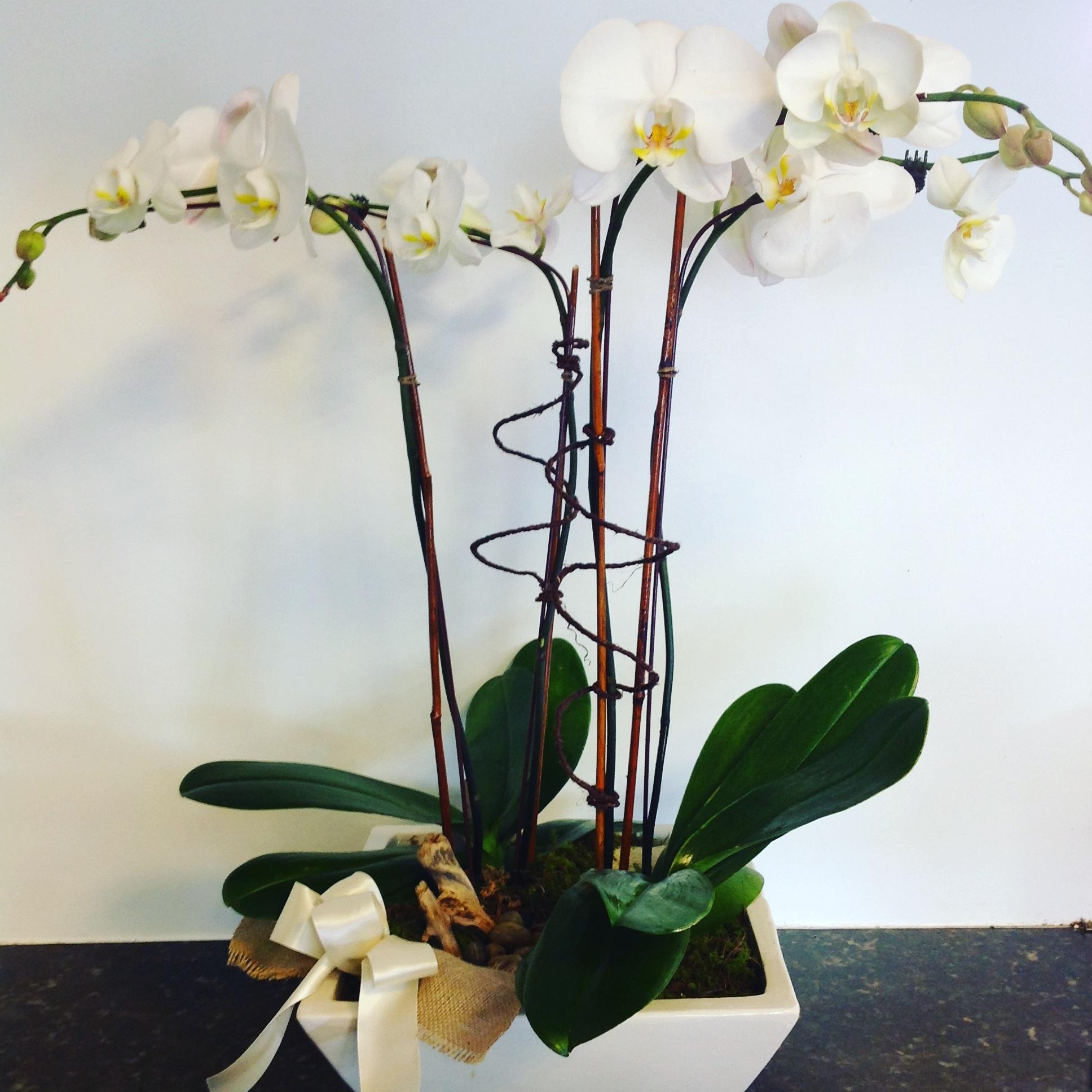 seasonal plants -
