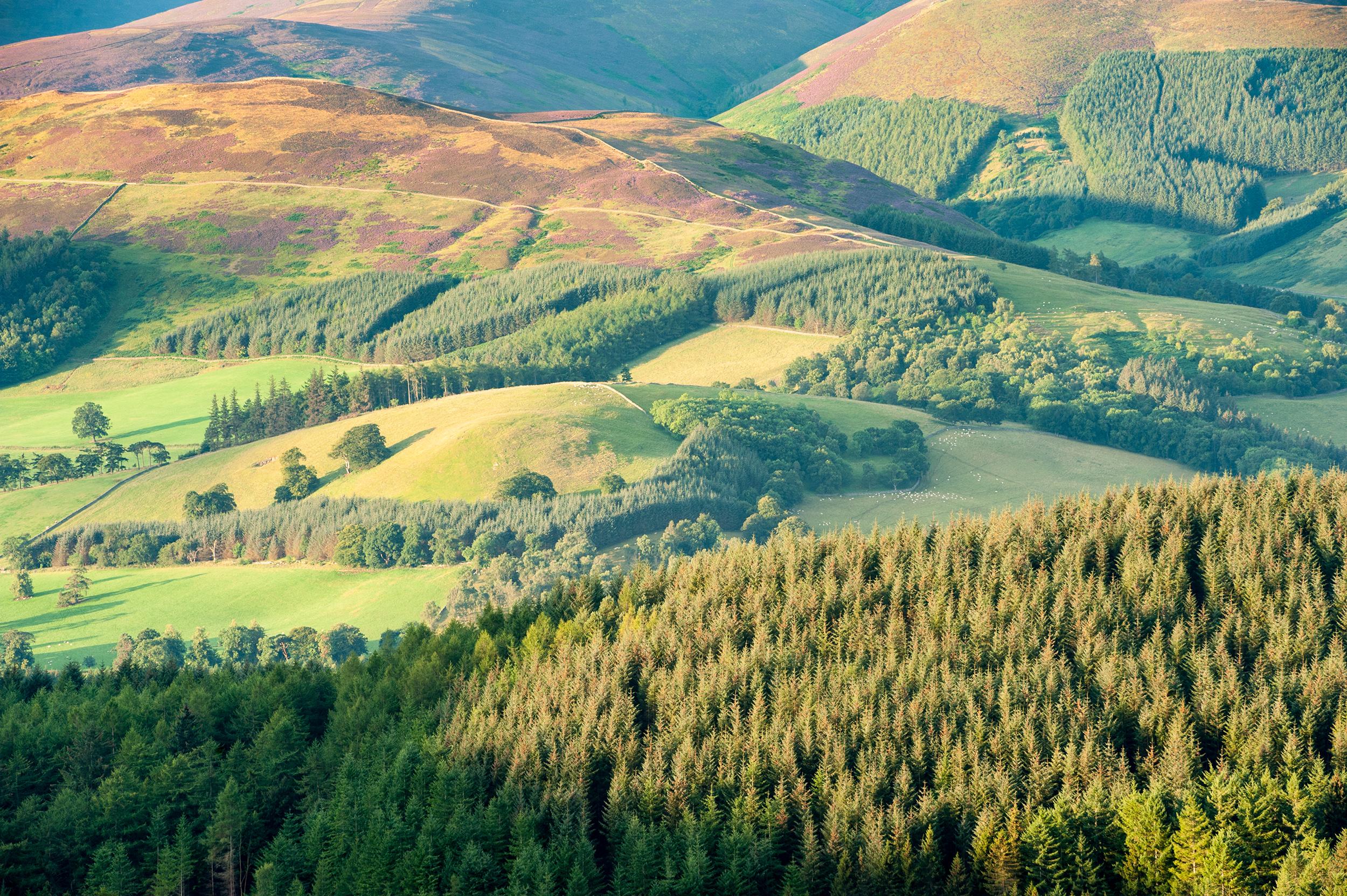 Near Peebles, Tweed Valley, Scotland