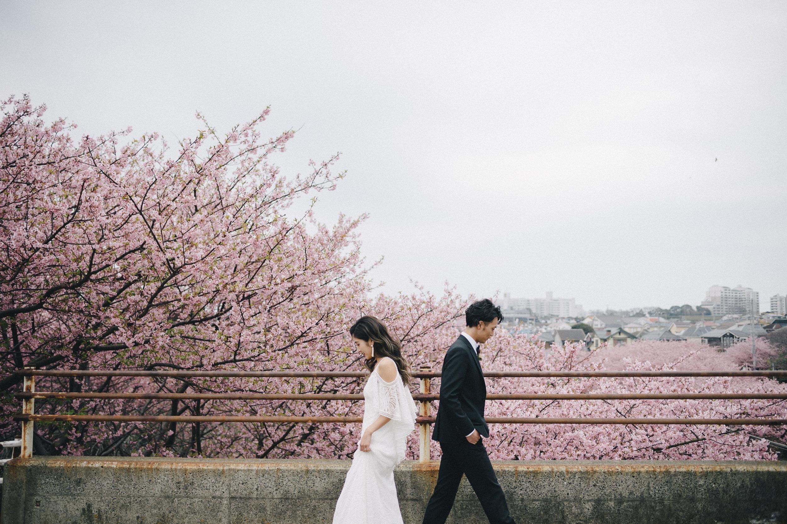 Sakura - 155,000yen + tax
