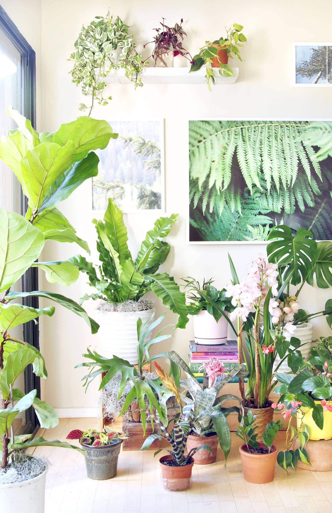 best-indoor-plants-flowering-house-plants-easy-to-grow-houseplants-apieceofrainbow-5.jpg