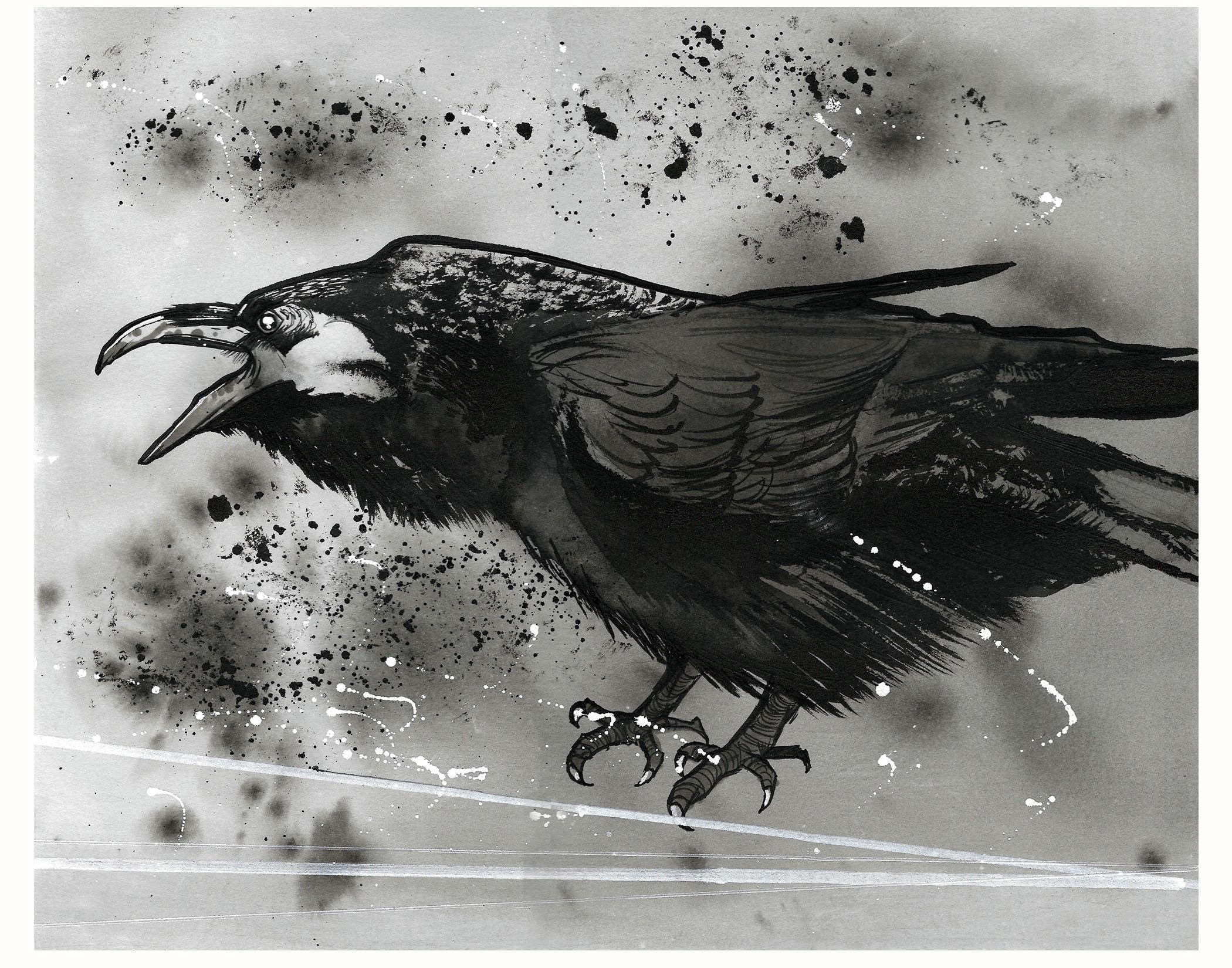 new-raven11x14.jpg