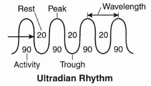 Inti-Mate Ultradian Rythm.png