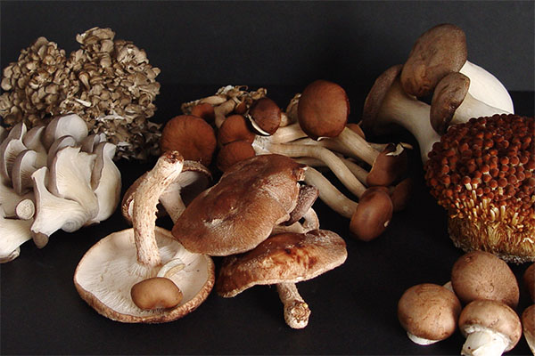 SOLEX_Mushroom Assortment.jpg