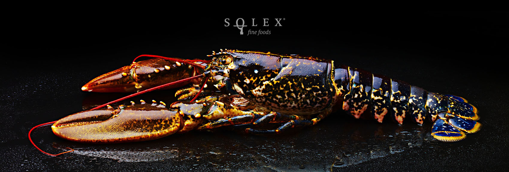 SOLEX412_BlueLobster-home.jpg