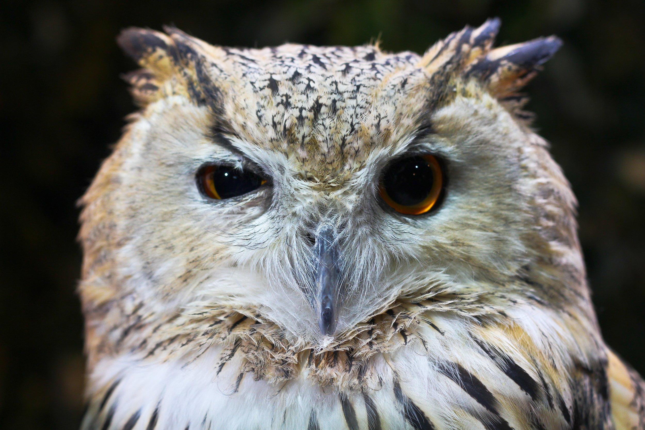 animal-avian-beak-1310787.jpg