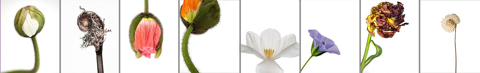 Blog.banner.Portrait.jpg
