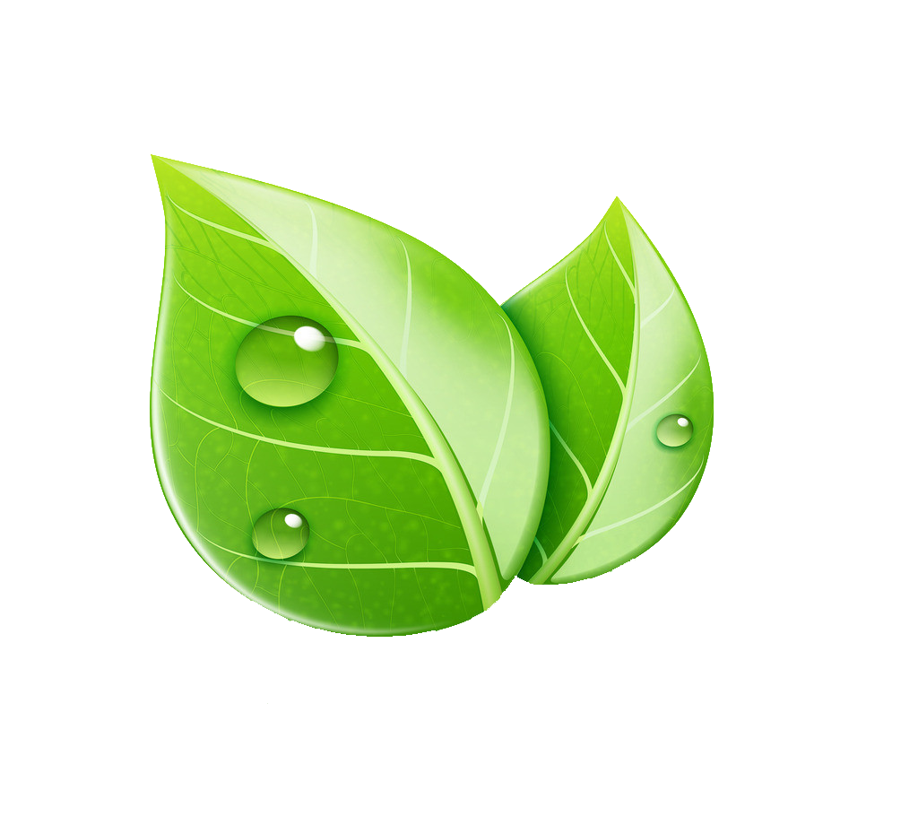 kisspng-leaf-royalty-free-ecology-illustration-leaf-5a999d758e2961.7397757415200167575823.png