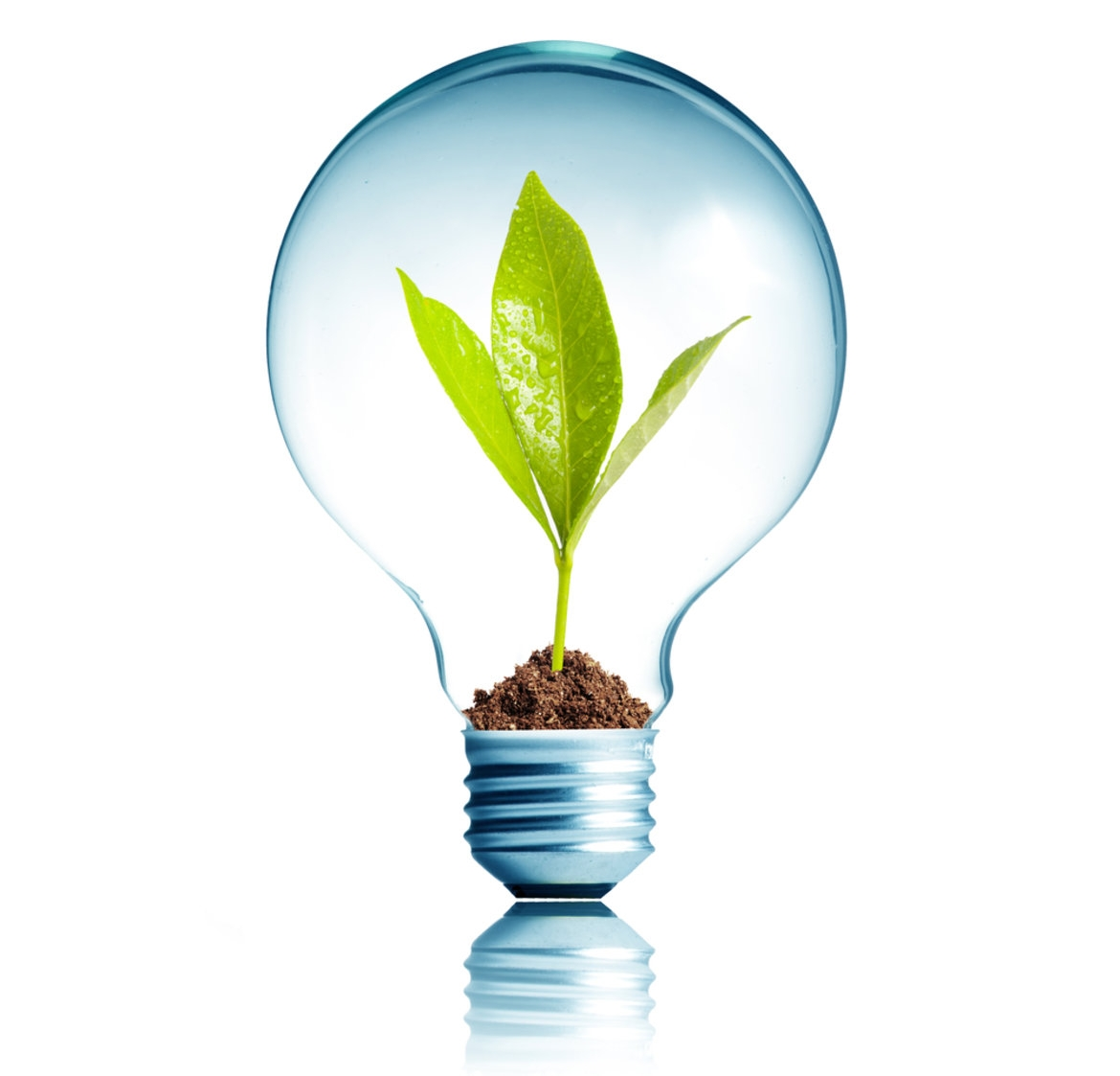 Light Bulb and Plant.jpg