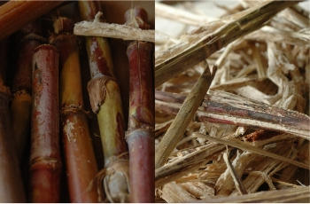 Sustainable Lifestyle Consultant - Wasara Raw Materials.jpg
