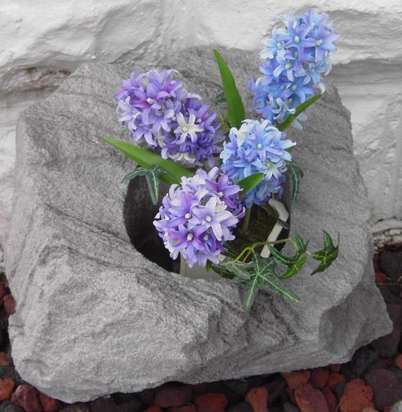 featherrockplant2sp.jpg