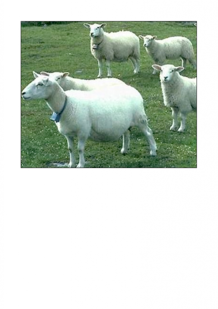 58-The-lost-sheep-lessonEng_004-724x1024.png