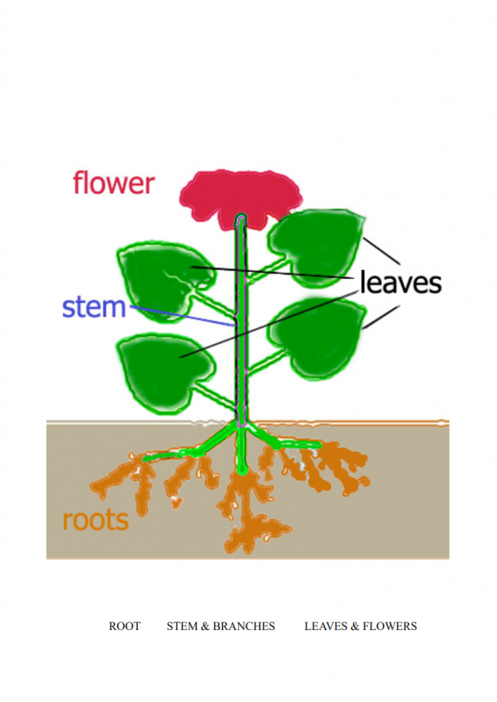 14.-How-We-Grow-lessonEng_005-724x1024.png